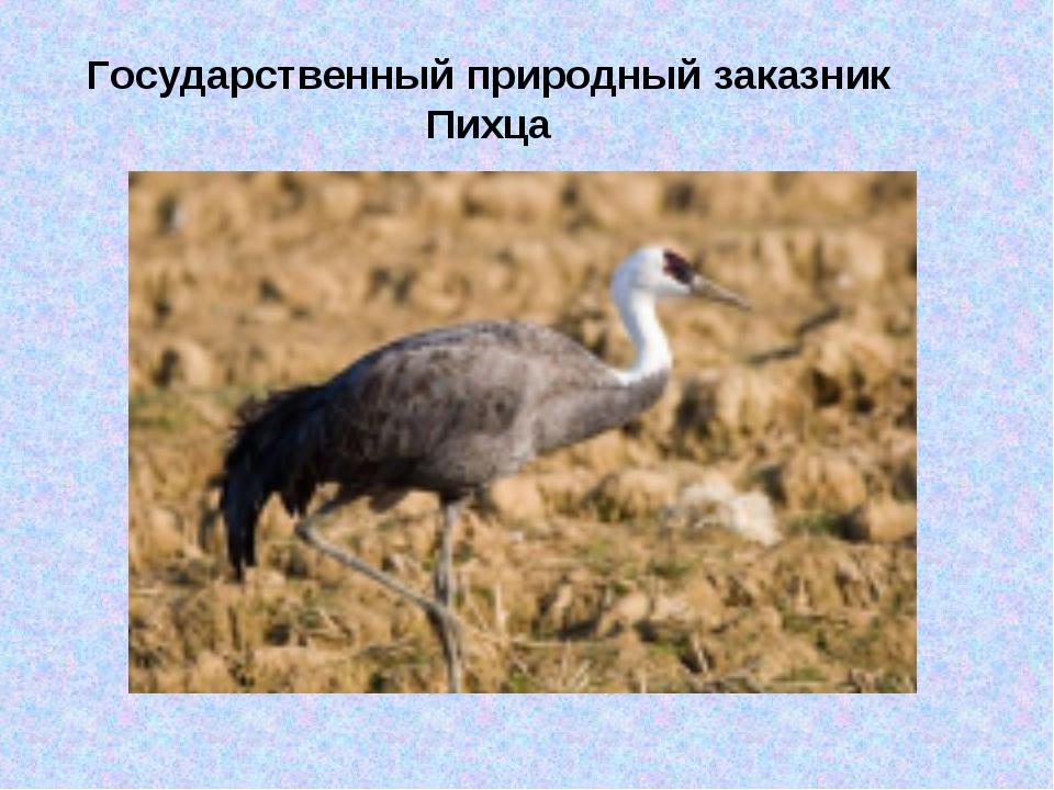 Государственный природный заказник Пихца