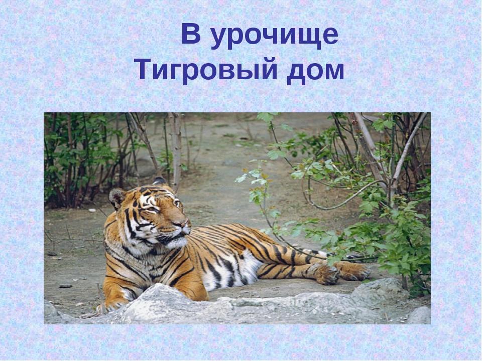 В урочище Тигровый дом