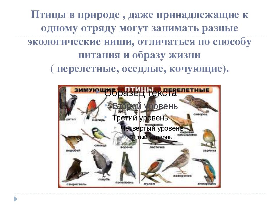 Птицы в природе , даже принадлежащие к одному отряду могут занимать разные эк...