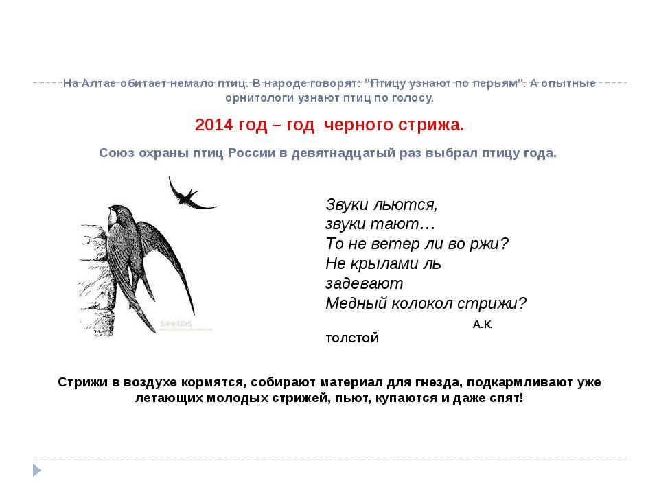 """На Алтае обитает немало птиц. В народе говорят: """"Птицу узнают по перьям"""". А..."""