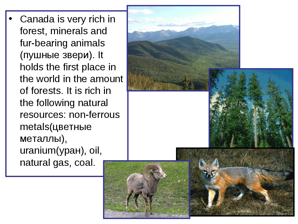 Canada is very rich in forest, minerals and fur-bearing animals (пушные звери...