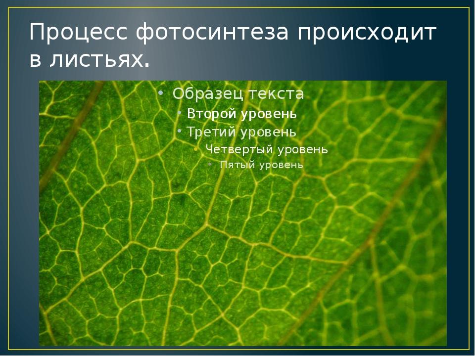 Процесс фотосинтеза происходит в листьях.