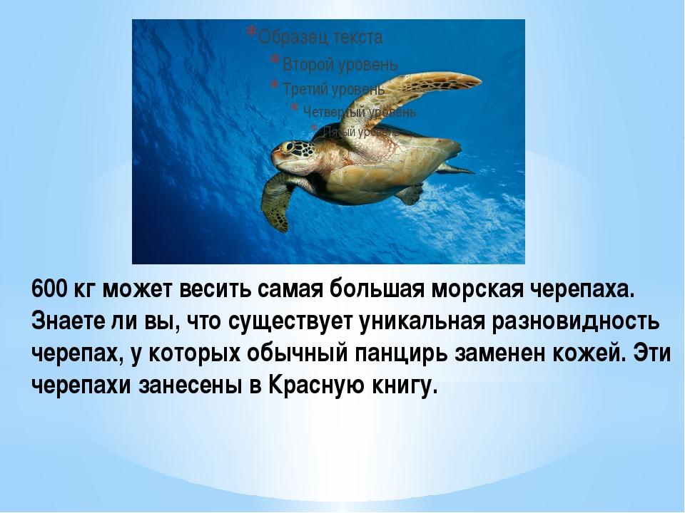 600 кг может весить самая большая морская черепаха. Знаете ли вы, что существ...