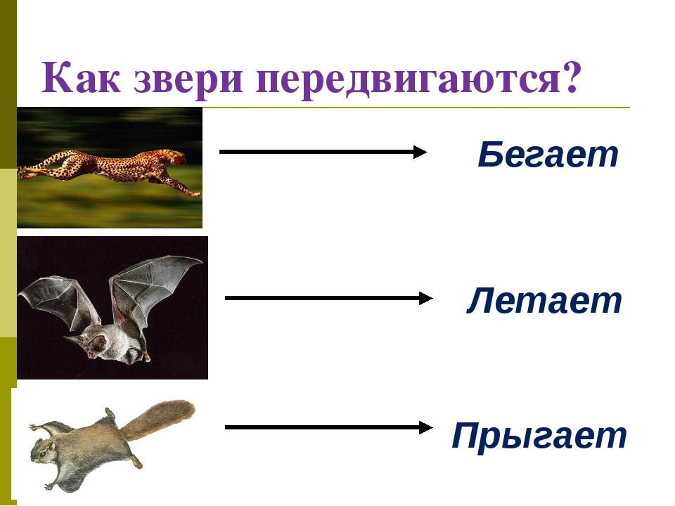 Как звери передвигаются? Бегает Летает Прыгает