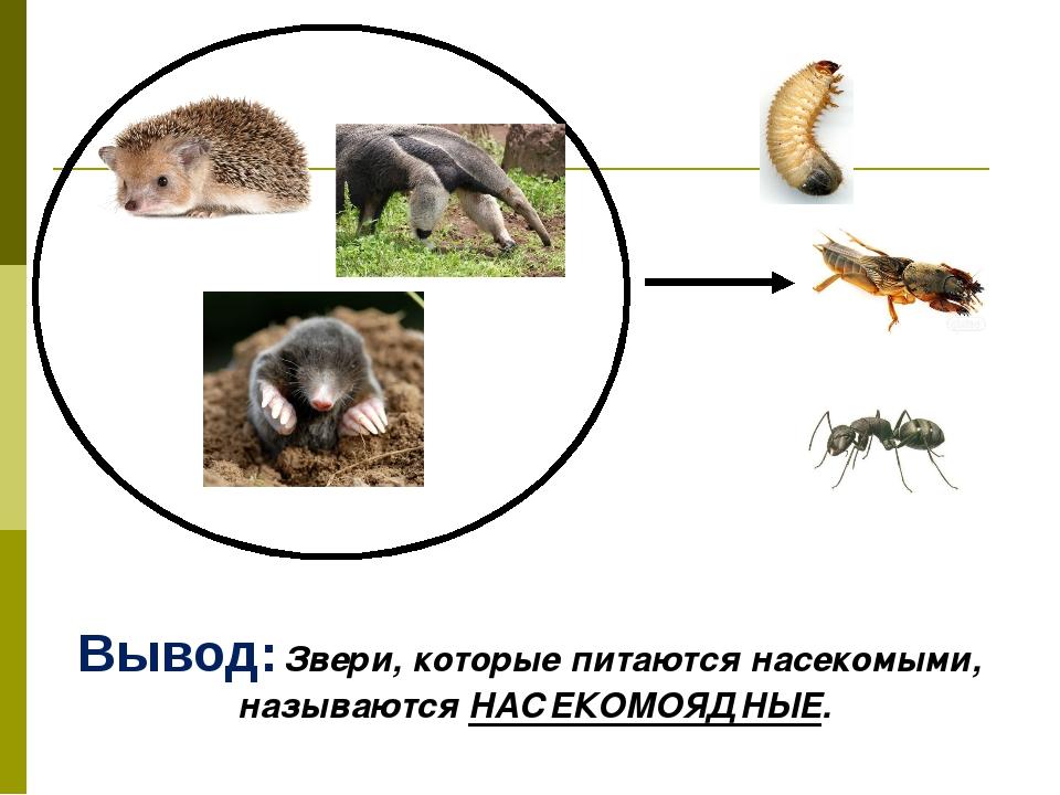 Вывод: Звери, которые питаются насекомыми, называются НАСЕКОМОЯДНЫЕ.