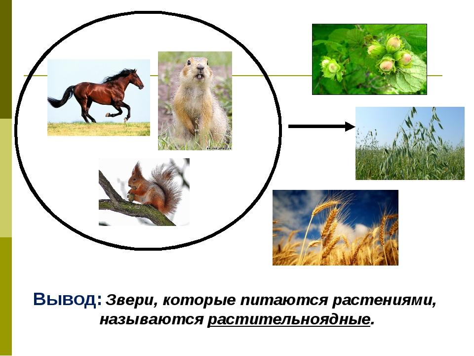 Вывод: Звери, которые питаются растениями, называются растительноядные.