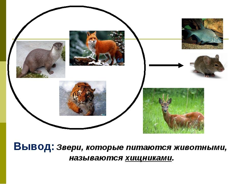 Вывод: Звери, которые питаются животными, называются хищниками.