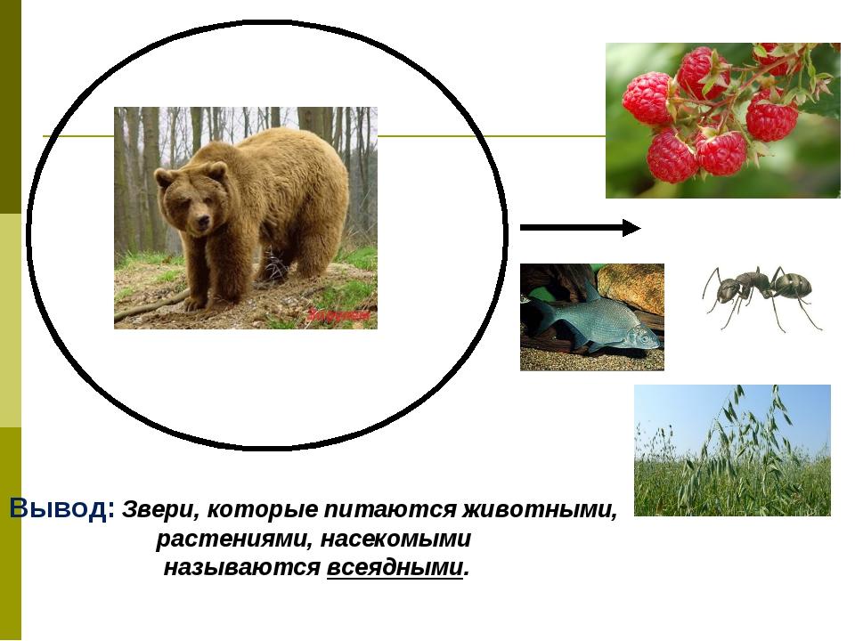 Вывод: Звери, которые питаются животными, растениями, насекомыми называются в...