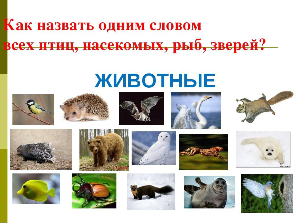 Как назвать одним словом всех птиц, насекомых, рыб, зверей? ЖИВОТНЫЕ