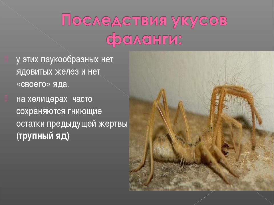 у этих паукообразных нет ядовитых желез и нет «своего» яда. на хелицерах част...