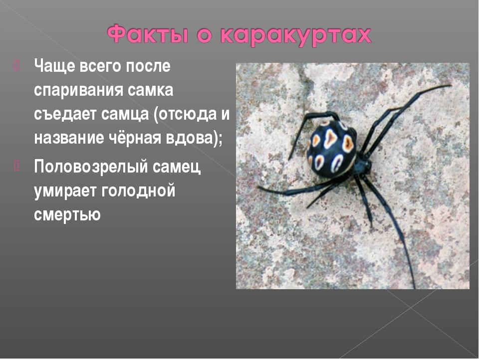 Чаще всего после спаривания самка съедает самца (отсюда и название чёрная вдо...