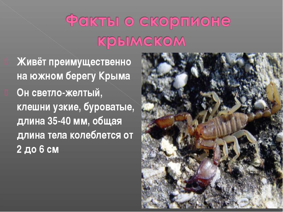 Живёт преимущественно на южном берегу Крыма Он светло-желтый, клешни узкие, б...