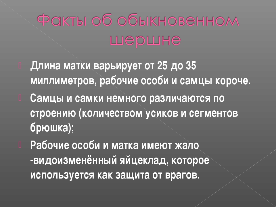 Длина матки варьирует от 25 до 35 миллиметров, рабочие особи и самцы короче....