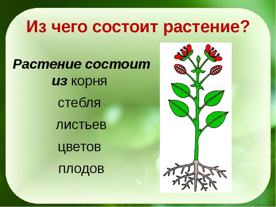 Из чего состоит растение? Растение состоит из корня стебля листьев цветов пло...