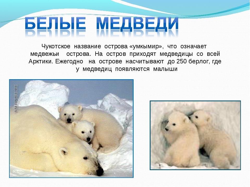 Чукотское название острова «умкымир», что означает медвежьи острова. На остро...