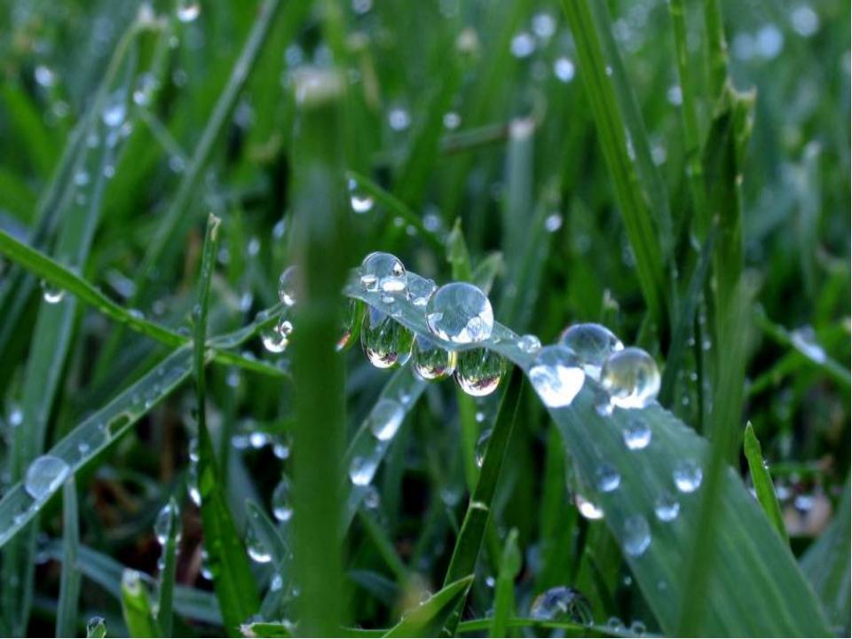 РОСА Утром бусы засверкали, Всю траву собой застлали, А пошли искать их дн...