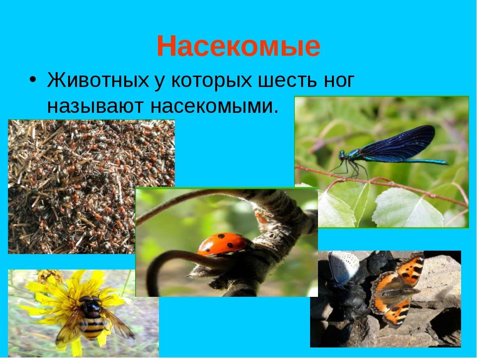 Насекомые Животных у которых шесть ног называют насекомыми.