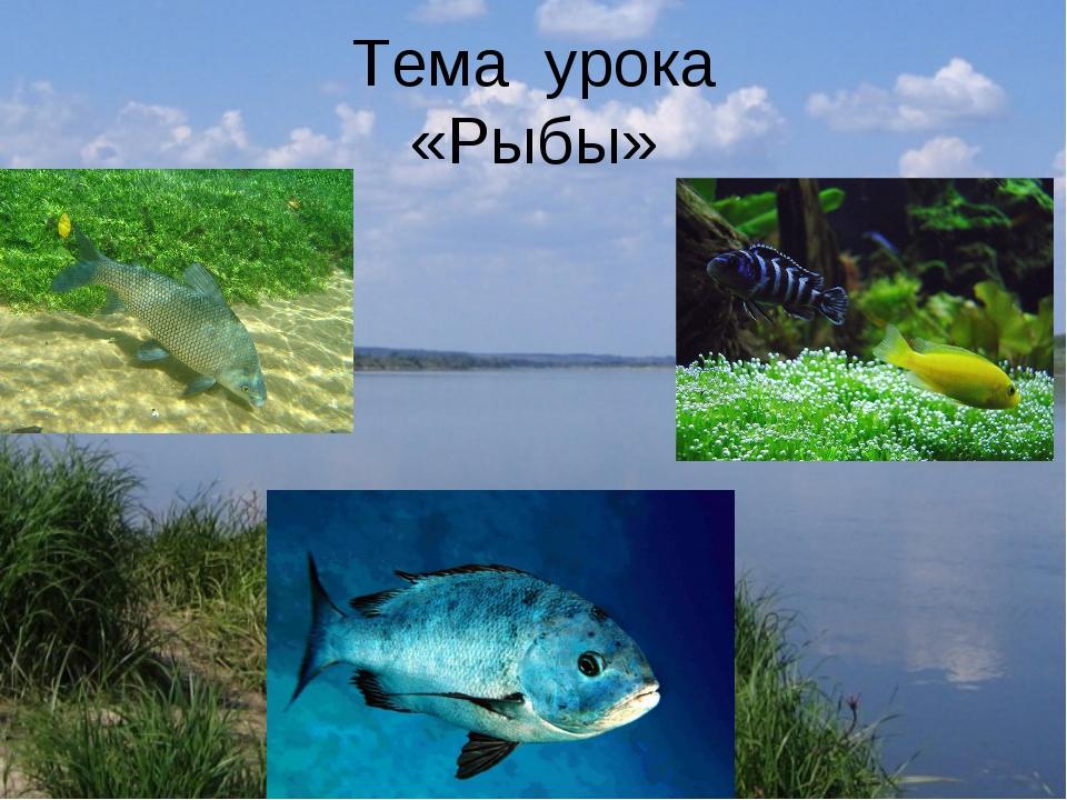 Тема урока «Рыбы»