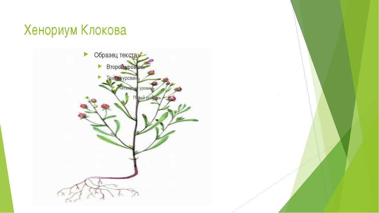 Хенориум Клокова