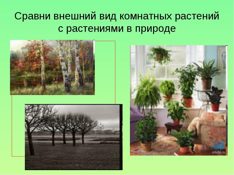 Сравни внешний вид комнатных растений с растениями в природе