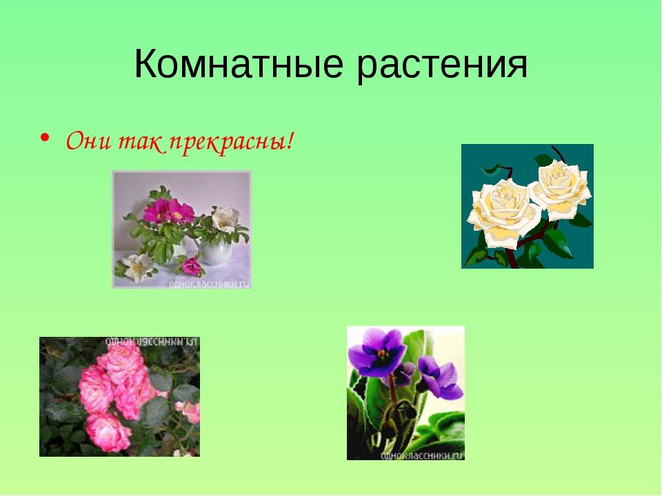 Комнатные растения Они так прекрасны!