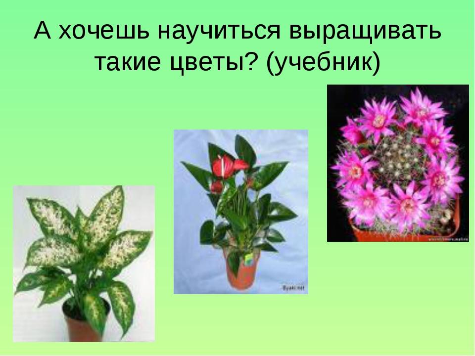 А хочешь научиться выращивать такие цветы? (учебник)
