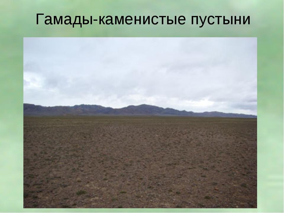 Гамады-каменистые пустыни
