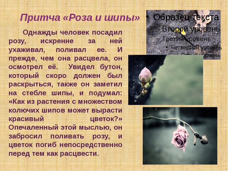 Притча «Роза и шипы» Однажды человек посадил розу, искренне за ней ухаживал,...