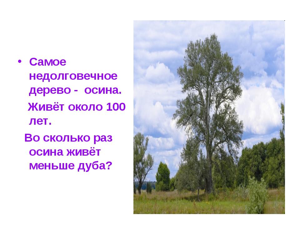 Самое недолговечное дерево - осина. Живёт около 100 лет. Во сколько раз осина...