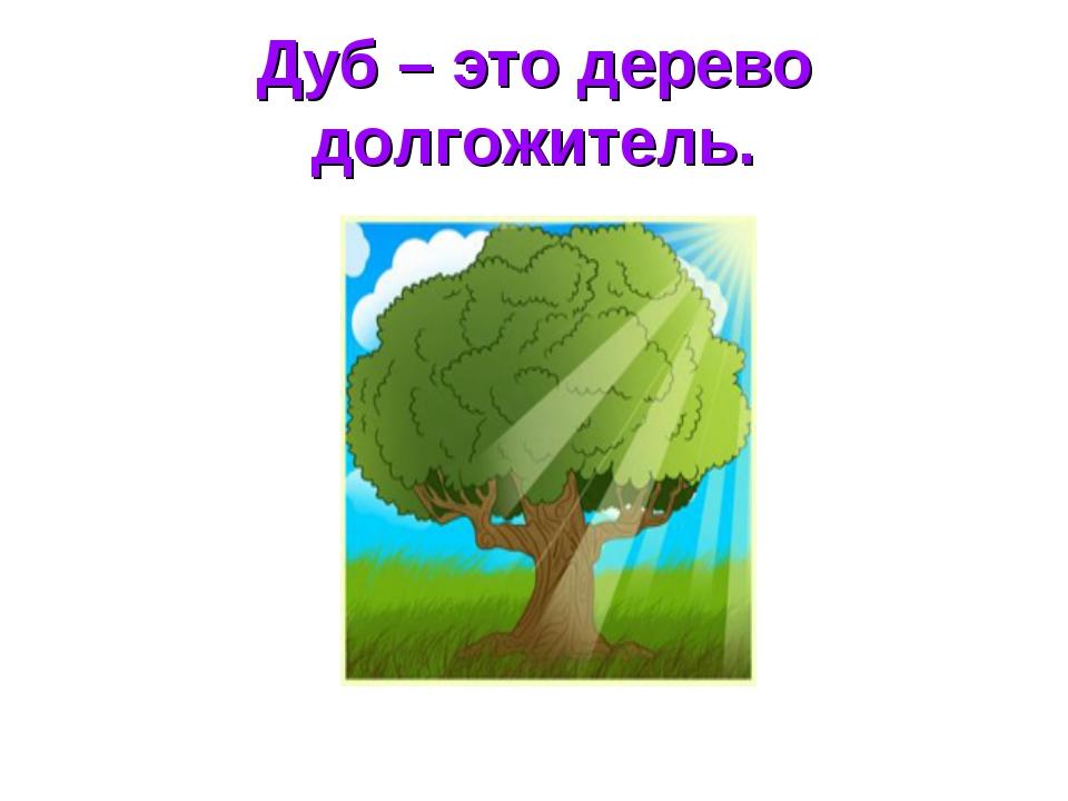 Дуб – это дерево долгожитель.