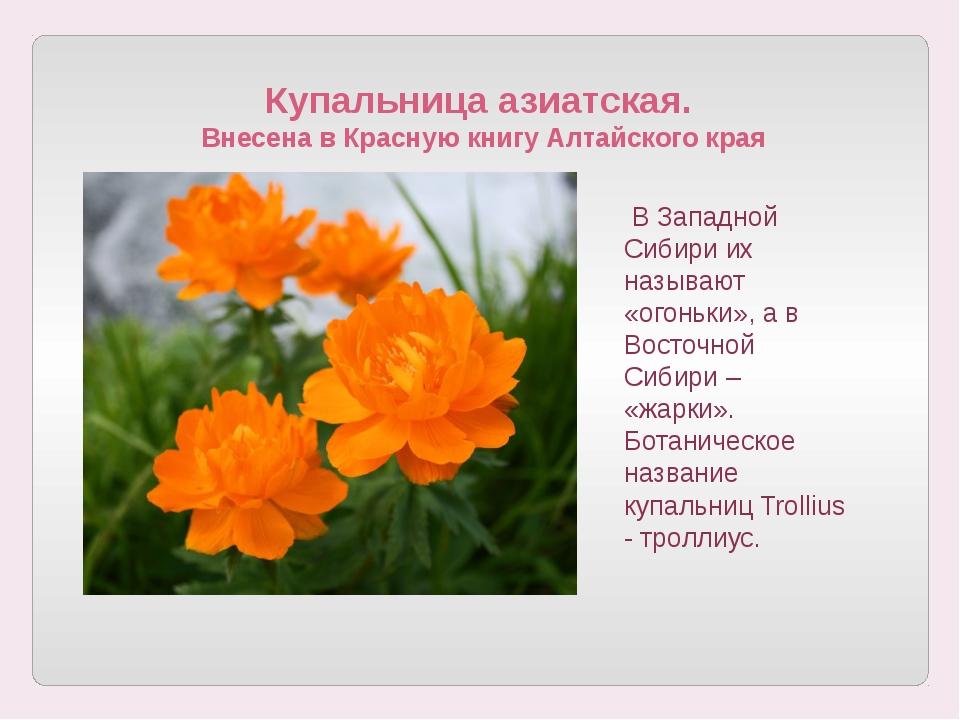 Купальница азиатская. Внесена в Красную книгу Алтайского края В Западной Сиб...
