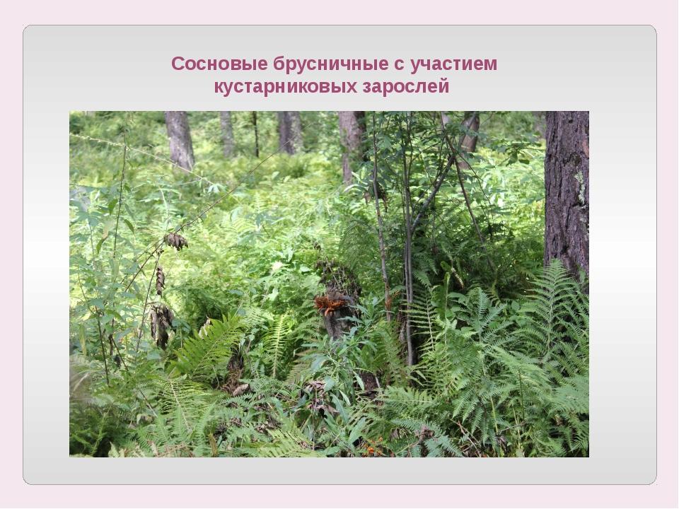 Сосновые брусничные с участием кустарниковых зарослей