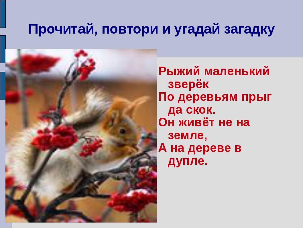 Прочитай, повтори и угадай загадку Рыжий маленький зверёк По деревьям прыг да...