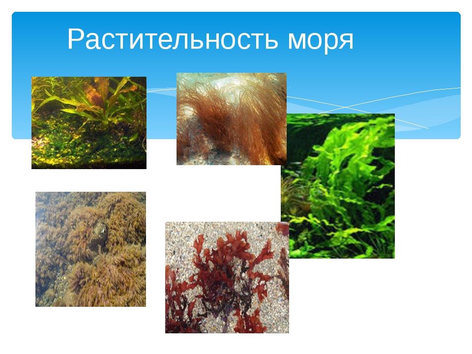 Растительность моря