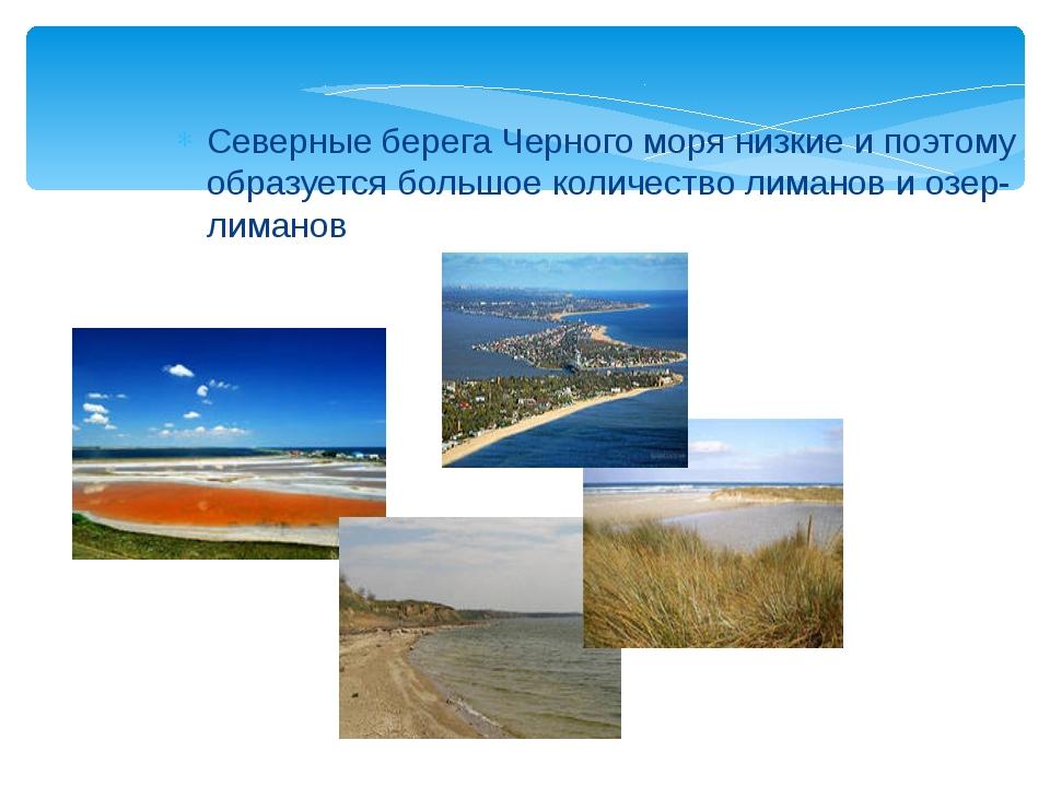 Северные берега Черного моря низкие и поэтому образуется большое количество л...