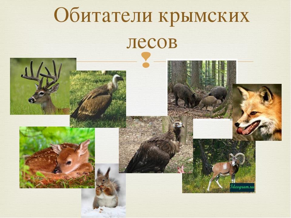 Обитатели крымских лесов 