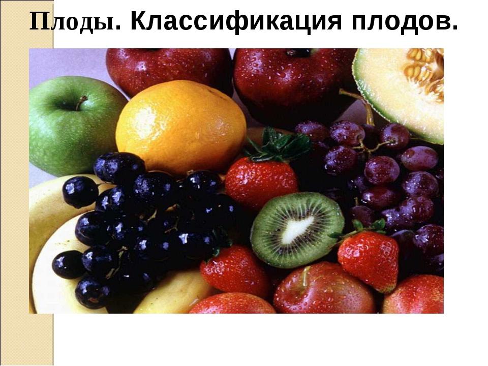 Плоды. Классификация плодов.