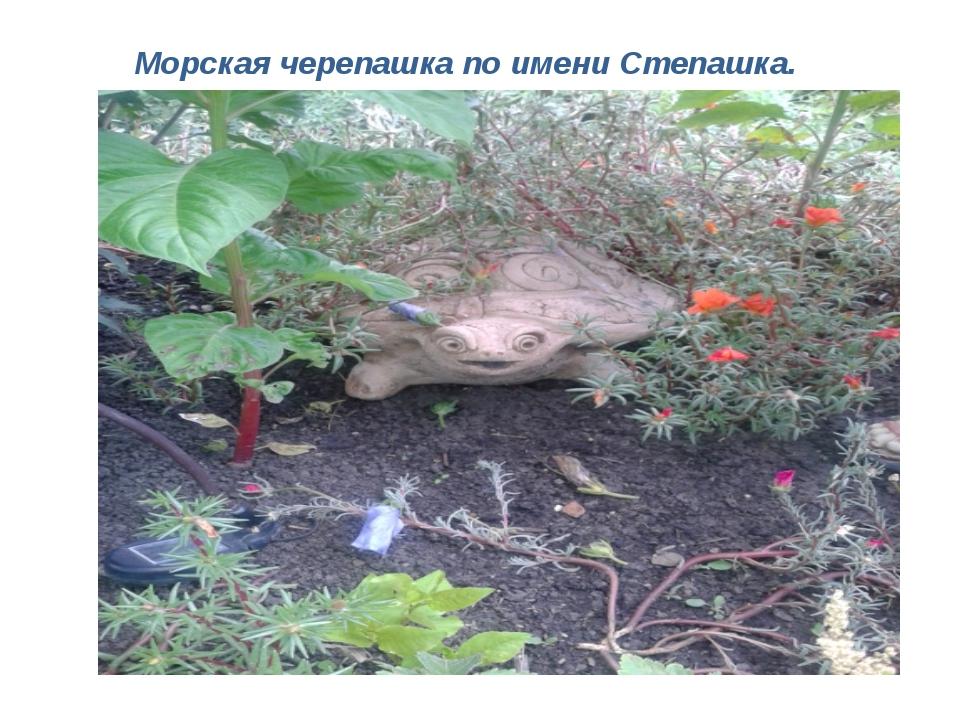 Морская черепашка по имени Степашка.