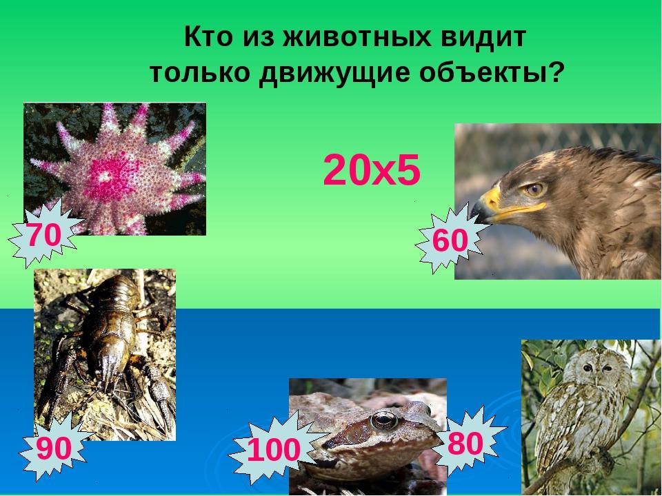 90 100 70 80 60 Кто из животных видит только движущие объекты? 20х5