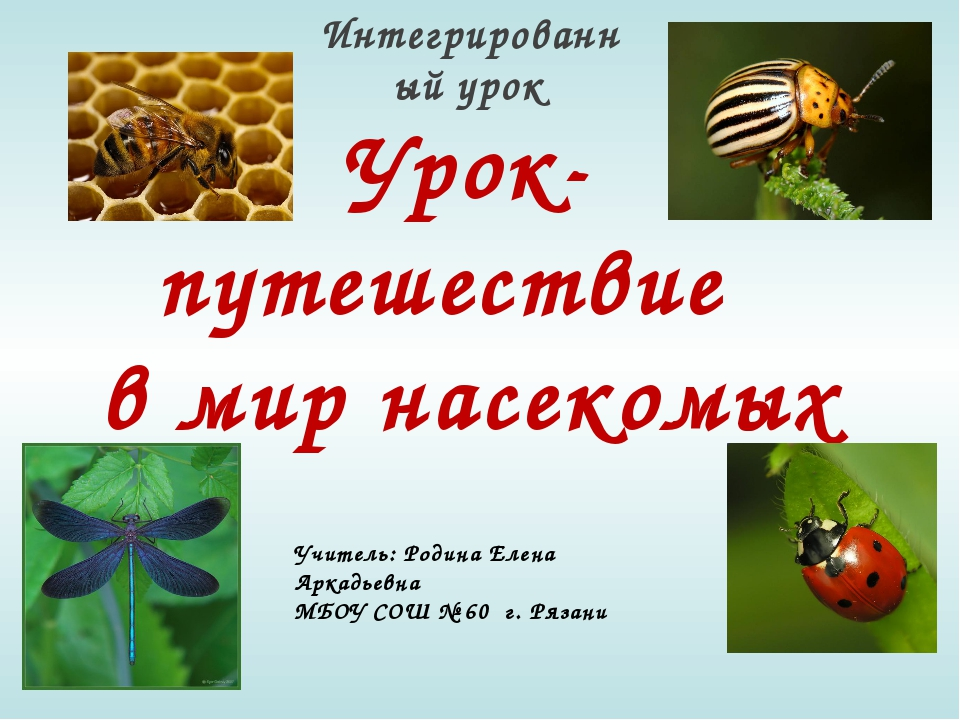 Урок- путешествие в мир насекомых Интегрированный урок Учитель: Родина Елена...