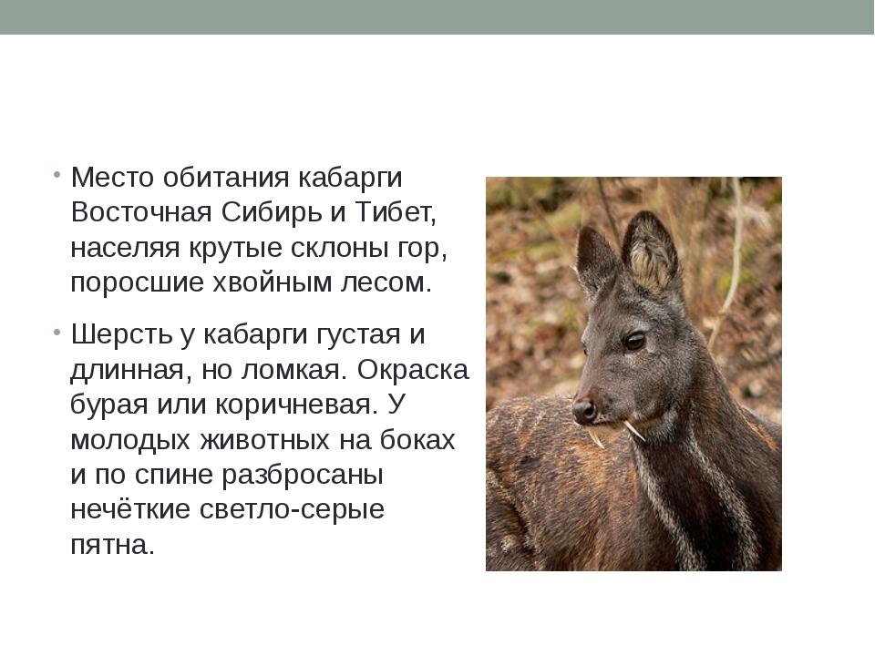 Место обитания кабарги ВосточнаяСибирьиТибет, населяя крутые склоны гор,...