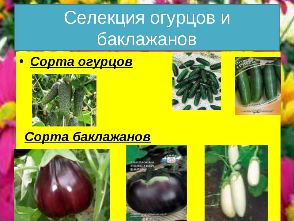 Селекция огурцов и баклажанов Сорта огурцов Сорта баклажанов