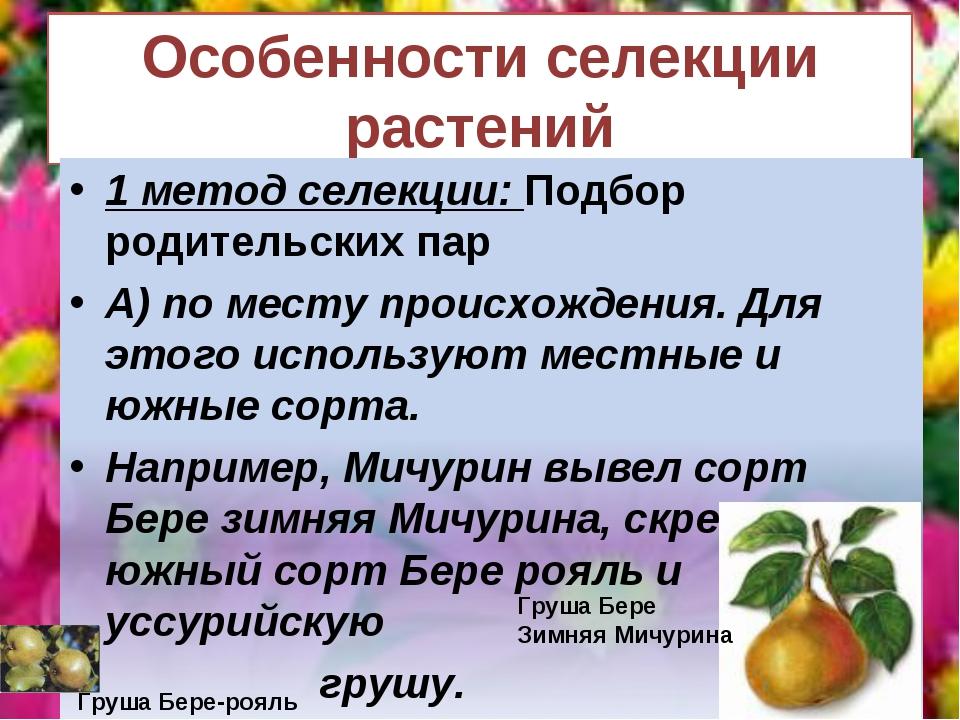 Особенности селекции растений Груша Бере-рояль Груша Бере Зимняя Мичурина