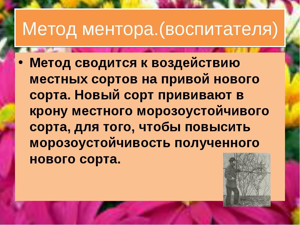 Метод ментора.(воспитателя) Метод сводится к воздействию местных сортов на пр...