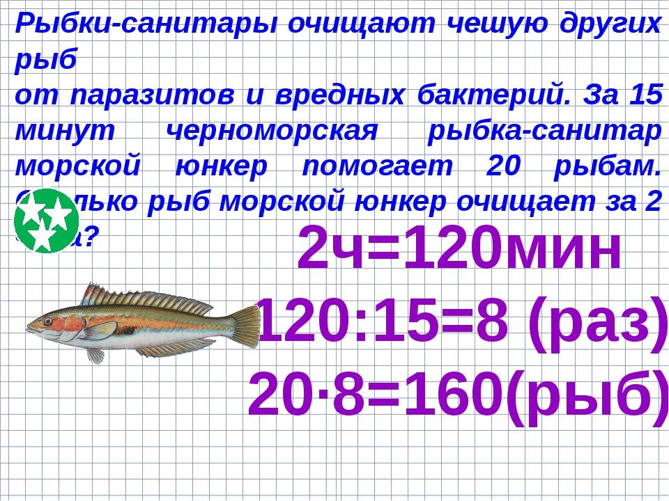 Рыбки-санитары очищают чешую других рыб от паразитов и вредных бактерий. За 1...