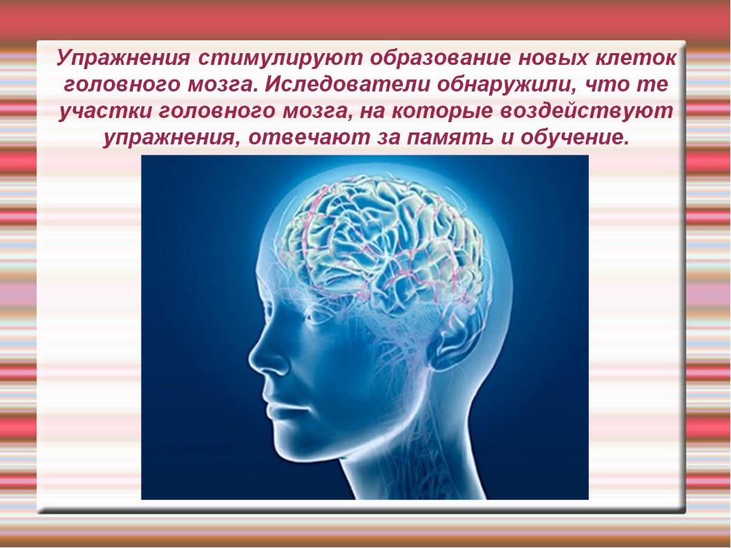 Упражнения стимулируют образование новых клеток головного мозга. Иследователи...