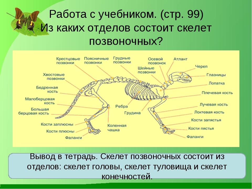 Работа с учебником. (стр. 99) Из каких отделов состоит скелет позвоночных? Вы...