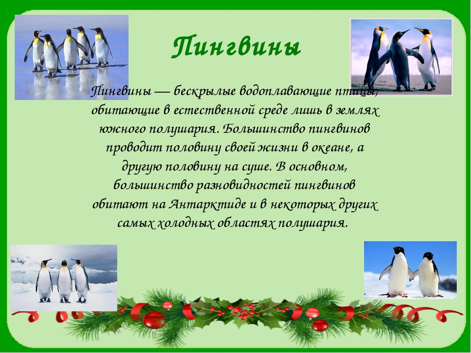 Пингвины Пингвины — бескрылые водоплавающие птицы, обитающие в естественной с...