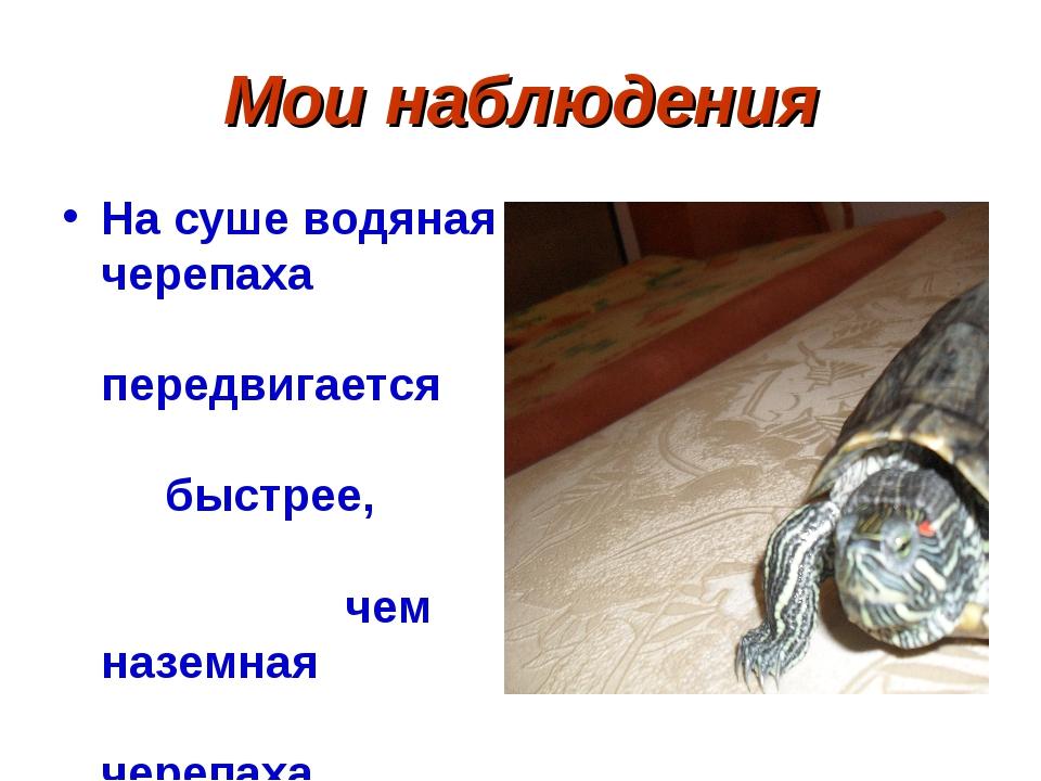 Мои наблюдения На суше водяная черепаха передвигается быстрее, чем наземная ч...