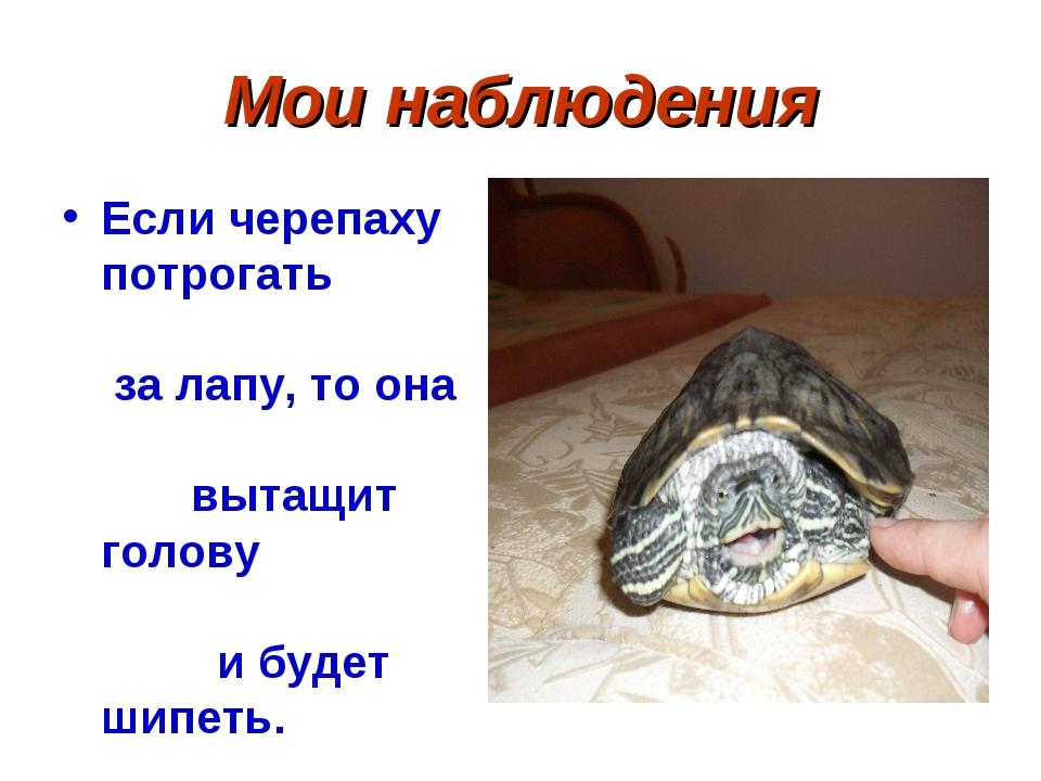 Мои наблюдения Если черепаху потрогать за лапу, то она вытащит голову и будет...